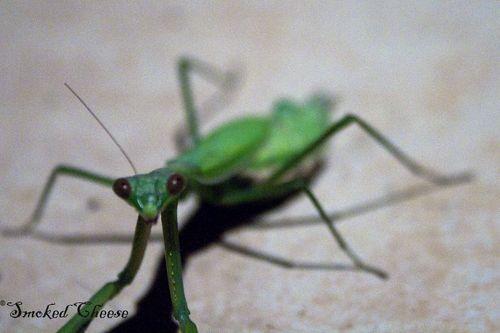 Mantis 9-3-11