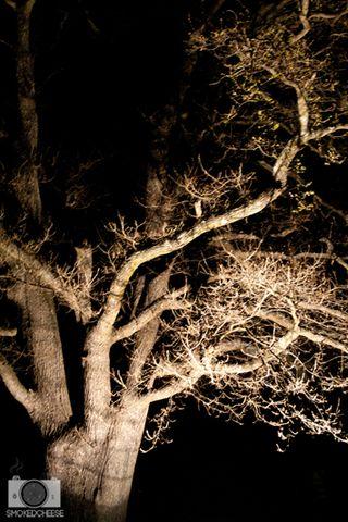 Tree 21-9-11