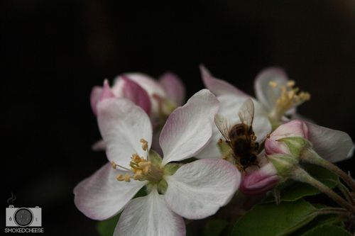 Bee 3-10-11