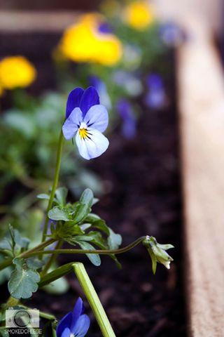 Flower 30-9-11