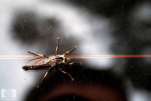 Bug 24-10-11