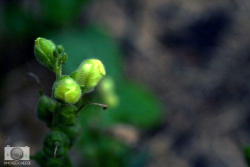 Plant 18-11-11