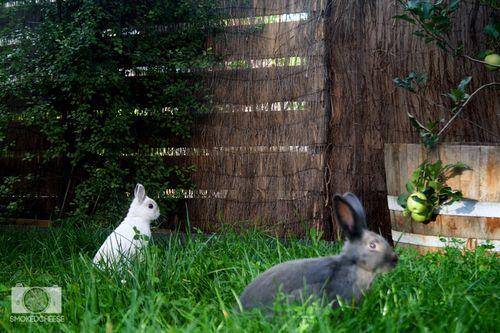 Bunnies 15-3-12