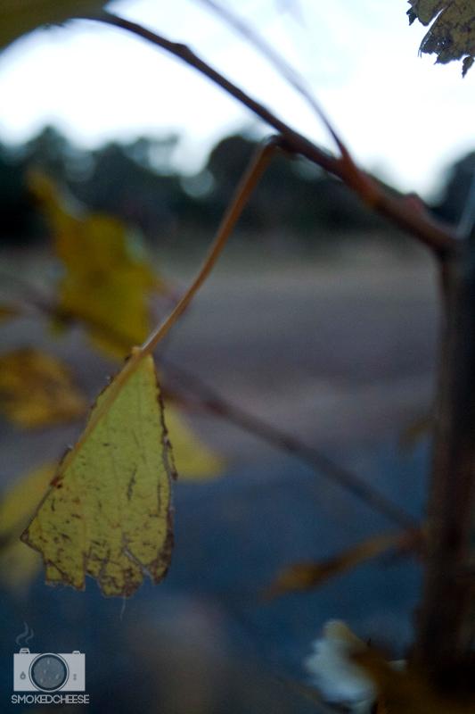 Leaf 30-5-12