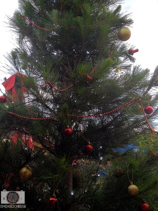 Tree 14-12-11
