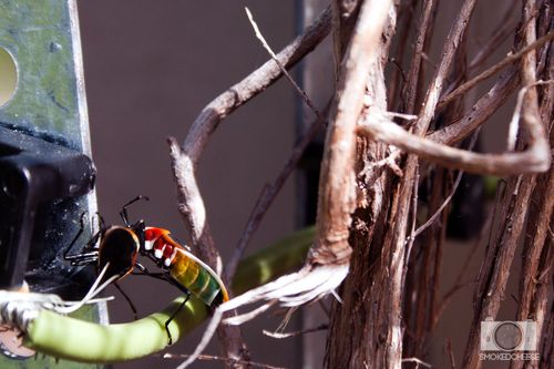 Bugs 5-4-12