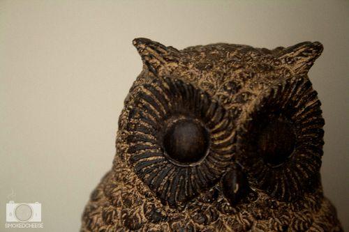 Owl 16-1-12