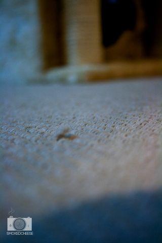 Carpet 24-5-12
