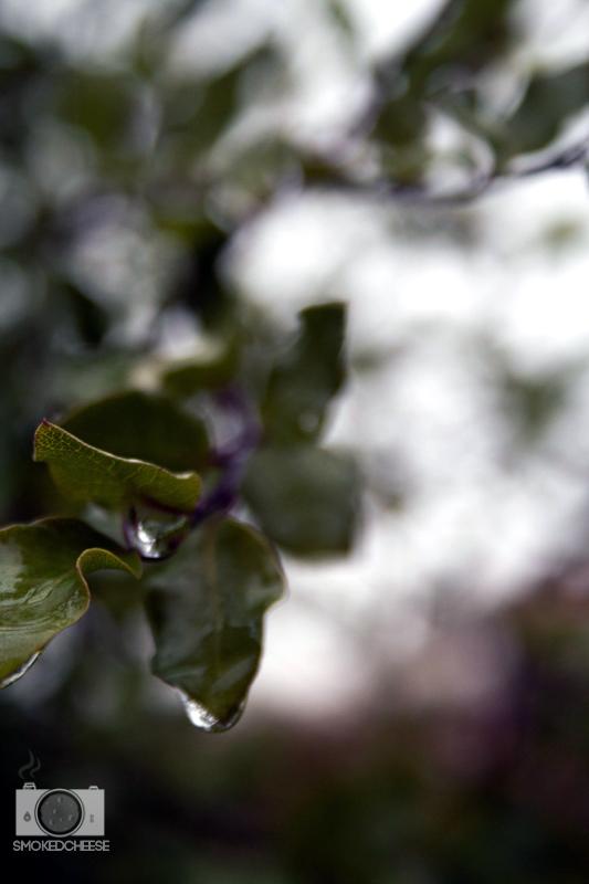 Leafdrop 28-5-12