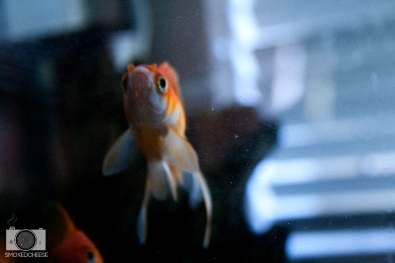 Fish 19-6-12