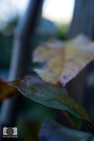 Leaves 10-07-12