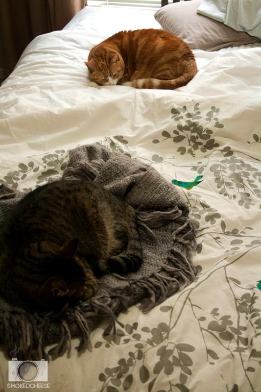 Cats 05-07-12